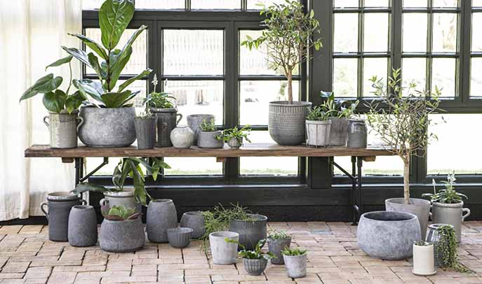 Variety of plants indoor and outdoor in grey concrete pots