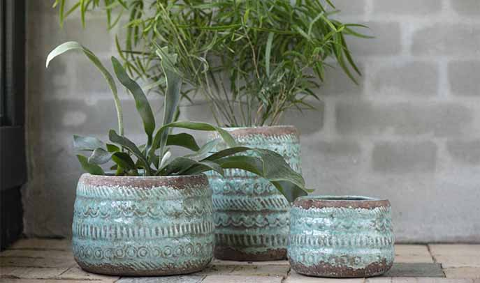 Attractive turquoise pots with green plants to purify the air